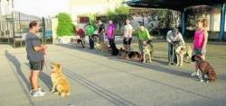 David y su perra escuela, Duna, en una de las clases de adiestramiento que imparte en la Residencia Canina de Roquetas de Mar.