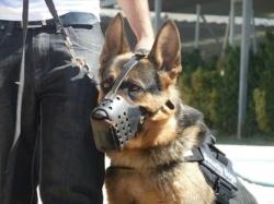 gruposecuritydogs.es